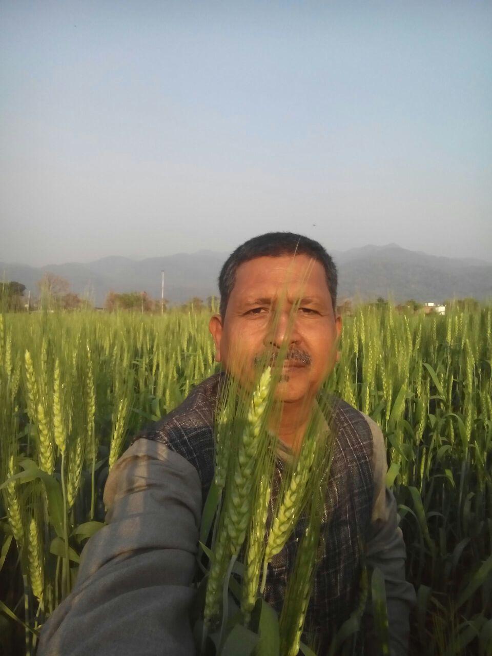 अपने खेत में गेहूं की तैयार फसल दिखाते मेहरा