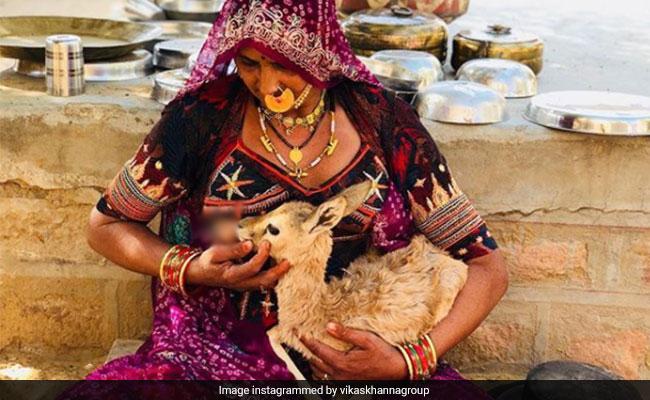 हिरन के बच्चे को दूध पिलाती महिला